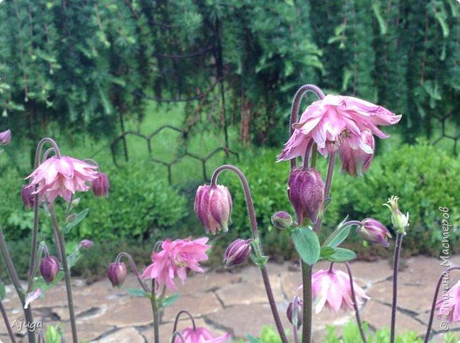 Ой, цветёт калина... фото 7