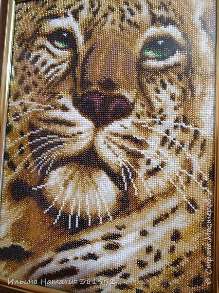 """""""Взгляд тигра"""" фото 3"""