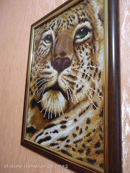 """""""Взгляд тигра"""" фото 2"""