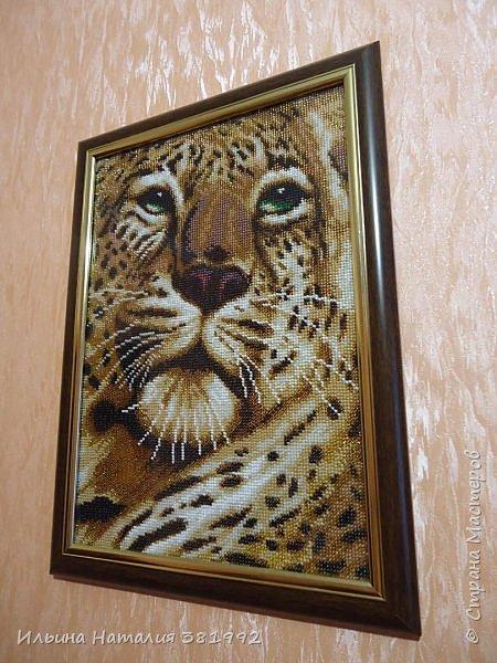 """""""Взгляд тигра"""" фото 1"""