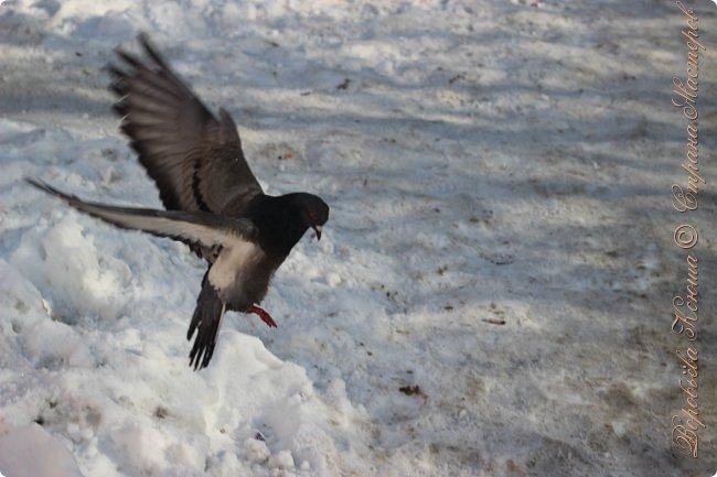 Здравствуй СМ. Давно я не выкладывала новые работы. В этот раз я снова пришла с новым фоторепортажем, который я посветила птицам.  Но,это не просто снятые на камеру птицы это те мгновения, когда они порхают в небе, расправляя свои красивые крылья или ... а впрочем вы всё сейчас увидите сами. фото 1