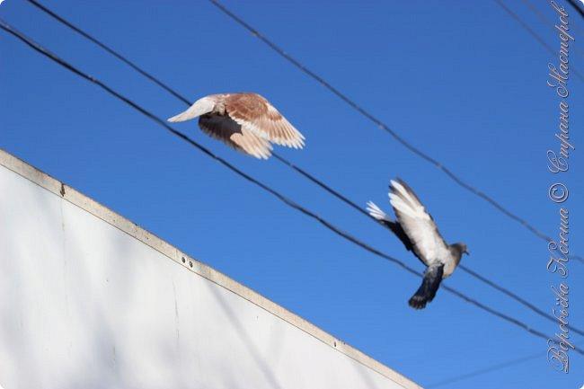 Здравствуй СМ. Давно я не выкладывала новые работы. В этот раз я снова пришла с новым фоторепортажем, который я посветила птицам.  Но,это не просто снятые на камеру птицы это те мгновения, когда они порхают в небе, расправляя свои красивые крылья или ... а впрочем вы всё сейчас увидите сами. фото 2