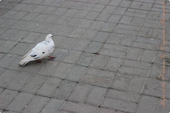 Здравствуй СМ. Давно я не выкладывала новые работы. В этот раз я снова пришла с новым фоторепортажем, который я посветила птицам.  Но,это не просто снятые на камеру птицы это те мгновения, когда они порхают в небе, расправляя свои красивые крылья или ... а впрочем вы всё сейчас увидите сами. фото 16