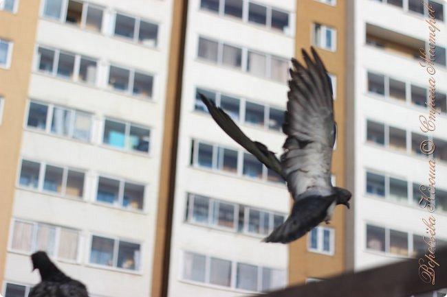 Здравствуй СМ. Давно я не выкладывала новые работы. В этот раз я снова пришла с новым фоторепортажем, который я посветила птицам.  Но,это не просто снятые на камеру птицы это те мгновения, когда они порхают в небе, расправляя свои красивые крылья или ... а впрочем вы всё сейчас увидите сами. фото 3