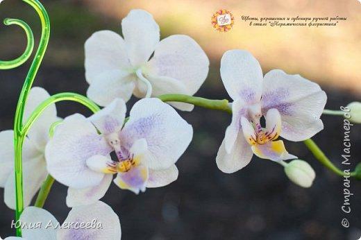 Долго я шла к этому цветку, все никак не решалась, хотя каттеры и молды на него приобрела самыми первыми  фото 3