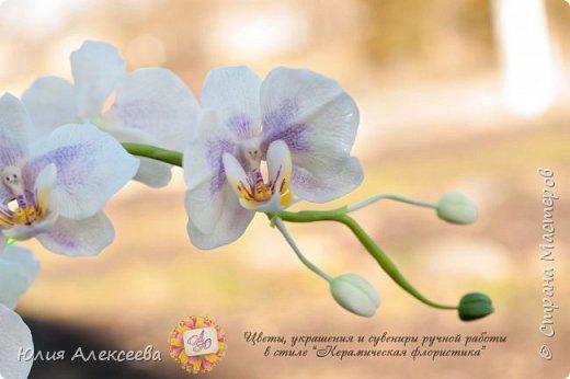 Долго я шла к этому цветку, все никак не решалась, хотя каттеры и молды на него приобрела самыми первыми  фото 1