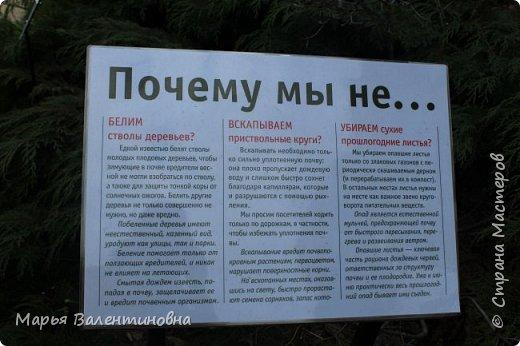 Итак, мы в ботаническом саду МГУ.  310  лет назад заложен этот сад. фото 7
