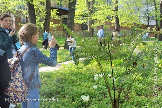 Итак, мы в ботаническом саду МГУ.  310  лет назад заложен этот сад. фото 8