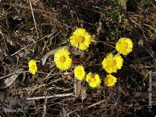 """"""" Вот и снова весна.                           Начинает земля представленье.  Рампы все включены.   фото 30"""