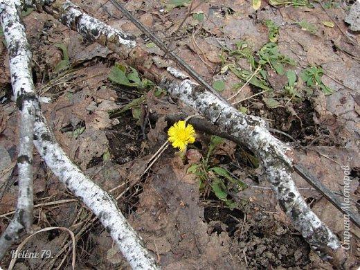 """"""" Вот и снова весна.                           Начинает земля представленье.  Рампы все включены.   фото 15"""