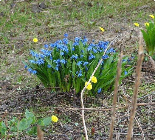 """"""" Вот и снова весна.                           Начинает земля представленье.  Рампы все включены.   фото 4"""