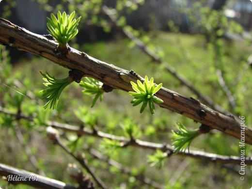 """"""" Вот и снова весна.                           Начинает земля представленье.  Рампы все включены.   фото 1"""