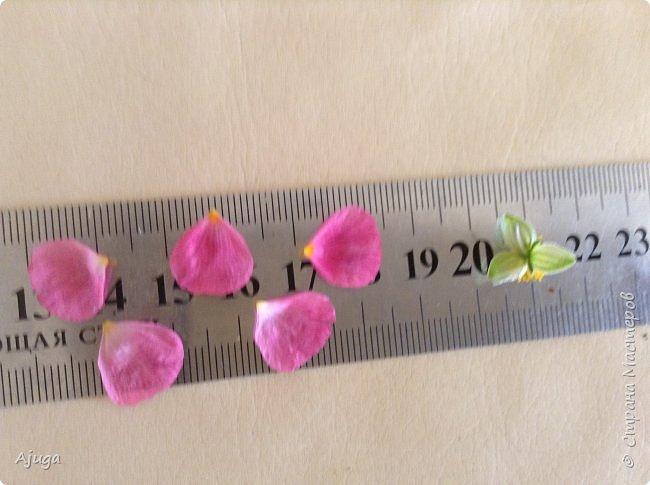 Сначала о камассии-цветонос высотой 40 -45 см., но бывают и выше. Цветы расположены вокруг цветоноса поочередно, листья в розетке длинные, узкие, цветы, как правило, срезаются без листьев.Семейство лилейных. фото 17