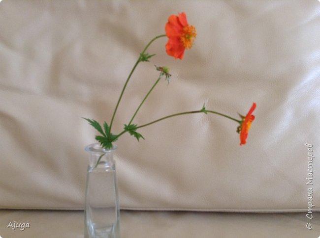 Сначала о камассии-цветонос высотой 40 -45 см., но бывают и выше. Цветы расположены вокруг цветоноса поочередно, листья в розетке длинные, узкие, цветы, как правило, срезаются без листьев.Семейство лилейных. фото 22