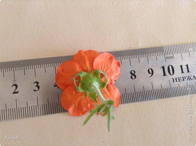 Сначала о камассии-цветонос высотой 40 -45 см., но бывают и выше. Цветы расположены вокруг цветоноса поочередно, листья в розетке длинные, узкие, цветы, как правило, срезаются без листьев.Семейство лилейных. фото 24