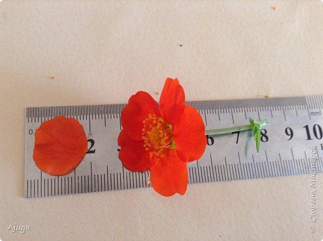 Сначала о камассии-цветонос высотой 40 -45 см., но бывают и выше. Цветы расположены вокруг цветоноса поочередно, листья в розетке длинные, узкие, цветы, как правило, срезаются без листьев.Семейство лилейных. фото 26