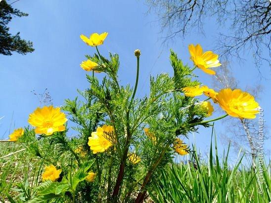 Это Иоанн Кронштадтский, святой праведник, сказал, что цветы – остатки рая на земле. И разве нельзя назвать райским местом этот родник в Бешпельтирском логу? У нас, в Горном Алтае, такая красота повсюду. И я приглашаю вас на неспешную прогулку по цветущему Алтаю. фото 43