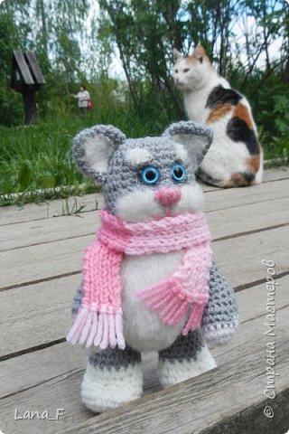 Кот Васька фото 3