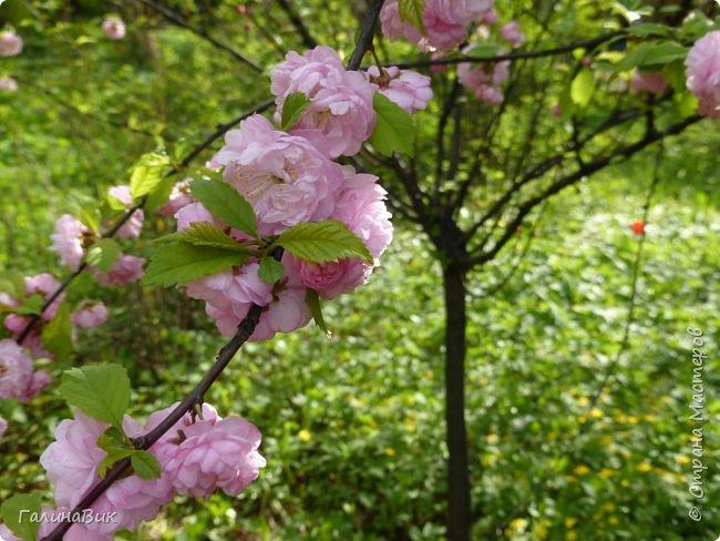 Майская Москва удивительно красива обилием цветущих деревьев, кустарников и многообразием цветов.  На первых двух фотографиях виды на Измайловский Кремль. фото 25