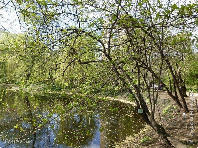 Майская Москва удивительно красива обилием цветущих деревьев, кустарников и многообразием цветов.  На первых двух фотографиях виды на Измайловский Кремль. фото 22