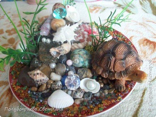 """Ландшафтная композиция """"морская черепаха"""" фото 4"""
