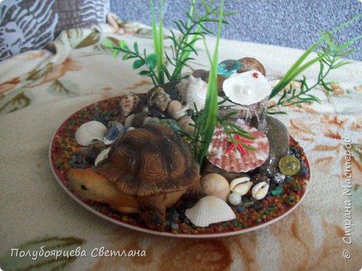 """Ландшафтная композиция """"морская черепаха"""" фото 5"""