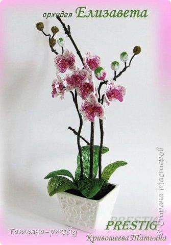 """Орхидея """"ЕЛИЗАВЕТА"""""""