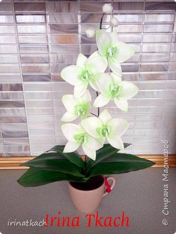 Мои орхидеи из фоамирана фото 2