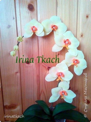 Мои орхидеи из фоамирана фото 7