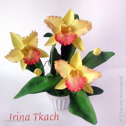 Мои орхидеи из фоамирана фото 4