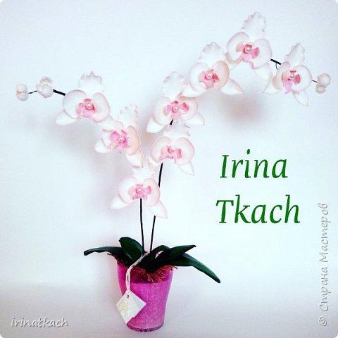 Мои орхидеи из фоамирана фото 11