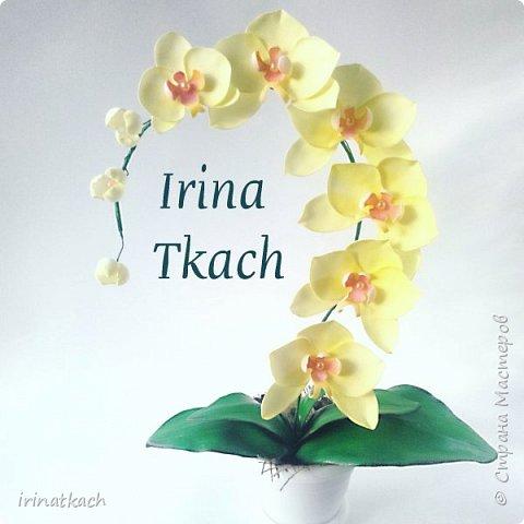 Мои орхидеи из фоамирана фото 12