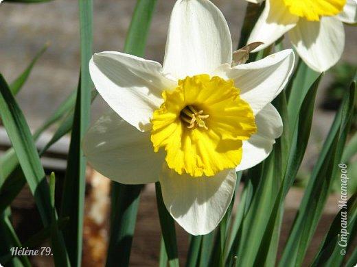 """""""О, весна без конца и без краю - Без конца и без краю мечта!...""""  (А. Блок) фото 3"""