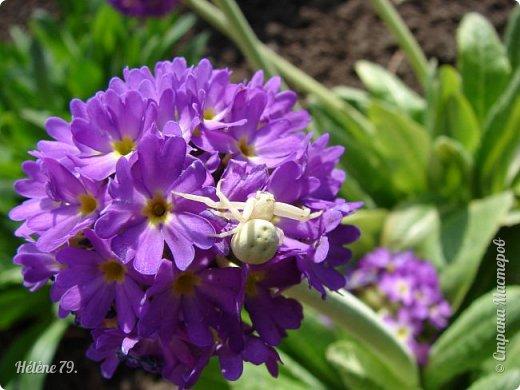 """""""О, весна без конца и без краю - Без конца и без краю мечта!...""""  (А. Блок) фото 8"""