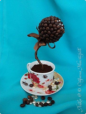 Вот и еще один танцующий цветок...  Бразильский кофе дарит аромат и в танец тянет каждого... фото 4
