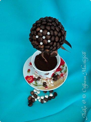Вот и еще один танцующий цветок...  Бразильский кофе дарит аромат и в танец тянет каждого... фото 5