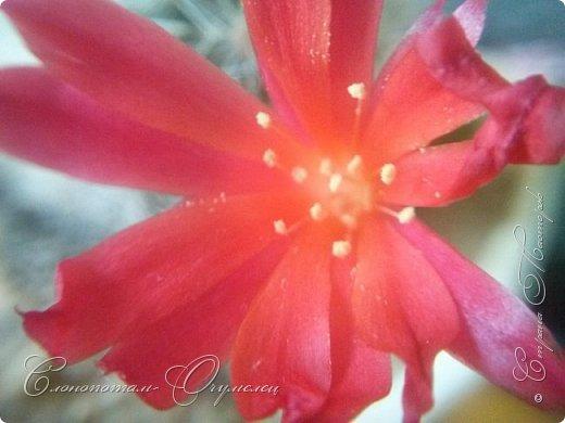 Доброго времени суток, Страна! Продолжаю рассказ о своих зелёных ёжиках - кактусятах. фото 18