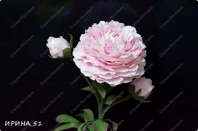 Здравствуйте! Рада всех видеть у себя в гостях. Я сегодня с пиончиком и интерьерной чашечкой с розами.  Приятного просмотра.  фото 12