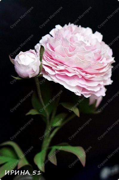 Здравствуйте! Рада всех видеть у себя в гостях. Я сегодня с пиончиком и интерьерной чашечкой с розами.  Приятного просмотра.  фото 9