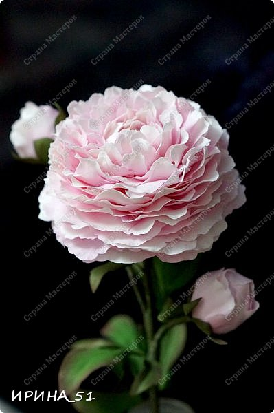 Здравствуйте! Рада всех видеть у себя в гостях. Я сегодня с пиончиком и интерьерной чашечкой с розами.  Приятного просмотра.  фото 7