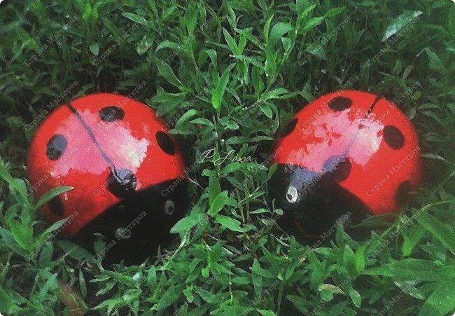 Здравствуйте,друзья!Рада встречи с вами! Вот таких божьих коровок сделала для украшения цветника. Делаются просто.МК можно посмотреть тут  http://stranamasterov.ru/node/782751 .Благодарю автора за идею и МК. фото 1