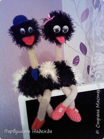гламурные страусята