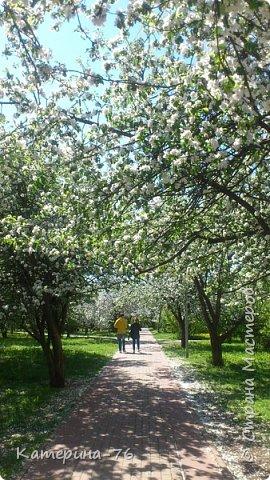 Здравствуйте, дорогие Мастера! Хочу поделиться с Вами красотой! Есть в Москве такое место - огромный яблоневый сад, бывшее владение Тимирязевской академии, а теперь это городской парк с дорожками, беседками, чудесными детскими площадками... Недавно гуляли там с младшим сыном, а там яблони цветут, красота  неописуемая.... фото 3