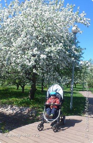 Здравствуйте, дорогие Мастера! Хочу поделиться с Вами красотой! Есть в Москве такое место - огромный яблоневый сад, бывшее владение Тимирязевской академии, а теперь это городской парк с дорожками, беседками, чудесными детскими площадками... Недавно гуляли там с младшим сыном, а там яблони цветут, красота  неописуемая.... фото 8