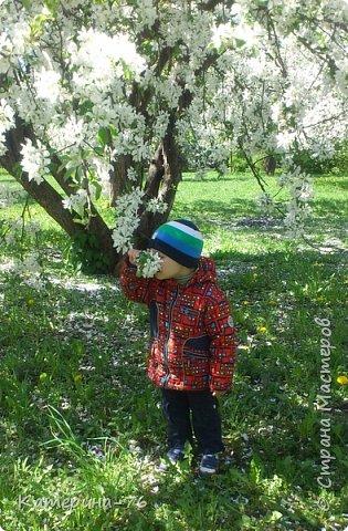 Здравствуйте, дорогие Мастера! Хочу поделиться с Вами красотой! Есть в Москве такое место - огромный яблоневый сад, бывшее владение Тимирязевской академии, а теперь это городской парк с дорожками, беседками, чудесными детскими площадками... Недавно гуляли там с младшим сыном, а там яблони цветут, красота  неописуемая.... фото 9