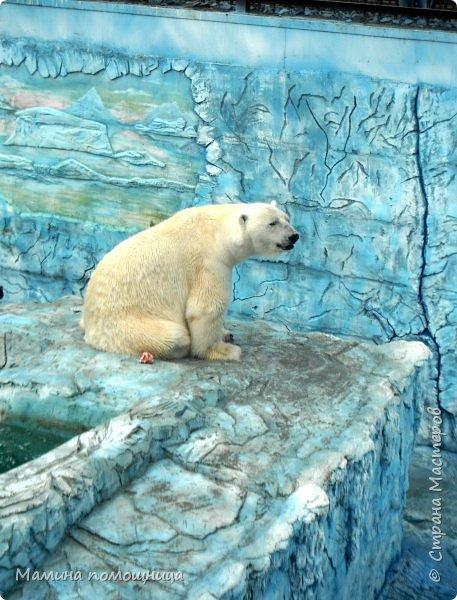 Здравствуйте! Наше новое приключение прошло в Екатеринбургском зоопарке. Зачем нужны зоопарки? Помимо того, что в зоопарках можно увидеть редких животных, там большое значение придают исследованию их поведения. Размножению животных в неволе уделяется большое внимание. Численность некоторых видов животных в природных популяциях настолько мала, что размножение в условиях зоопарков может быть единственным способом уберечь их от вымирания. В том случае, если удается получить многочисленное потомство, часть его выпускают в те места, где этот вид уже исчез.  фото 1