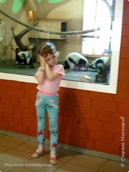Здравствуйте! Наше новое приключение прошло в Екатеринбургском зоопарке. Зачем нужны зоопарки? Помимо того, что в зоопарках можно увидеть редких животных, там большое значение придают исследованию их поведения. Размножению животных в неволе уделяется большое внимание. Численность некоторых видов животных в природных популяциях настолько мала, что размножение в условиях зоопарков может быть единственным способом уберечь их от вымирания. В том случае, если удается получить многочисленное потомство, часть его выпускают в те места, где этот вид уже исчез.  фото 15