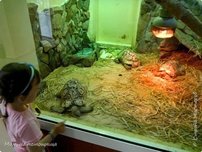 Здравствуйте! Наше новое приключение прошло в Екатеринбургском зоопарке. Зачем нужны зоопарки? Помимо того, что в зоопарках можно увидеть редких животных, там большое значение придают исследованию их поведения. Размножению животных в неволе уделяется большое внимание. Численность некоторых видов животных в природных популяциях настолько мала, что размножение в условиях зоопарков может быть единственным способом уберечь их от вымирания. В том случае, если удается получить многочисленное потомство, часть его выпускают в те места, где этот вид уже исчез.  фото 25
