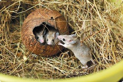 Здравствуйте! Наше новое приключение прошло в Екатеринбургском зоопарке. Зачем нужны зоопарки? Помимо того, что в зоопарках можно увидеть редких животных, там большое значение придают исследованию их поведения. Размножению животных в неволе уделяется большое внимание. Численность некоторых видов животных в природных популяциях настолько мала, что размножение в условиях зоопарков может быть единственным способом уберечь их от вымирания. В том случае, если удается получить многочисленное потомство, часть его выпускают в те места, где этот вид уже исчез.  фото 28