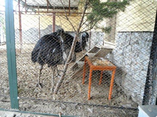 Здравствуйте! Наше новое приключение прошло в Екатеринбургском зоопарке. Зачем нужны зоопарки? Помимо того, что в зоопарках можно увидеть редких животных, там большое значение придают исследованию их поведения. Размножению животных в неволе уделяется большое внимание. Численность некоторых видов животных в природных популяциях настолько мала, что размножение в условиях зоопарков может быть единственным способом уберечь их от вымирания. В том случае, если удается получить многочисленное потомство, часть его выпускают в те места, где этот вид уже исчез.  фото 8